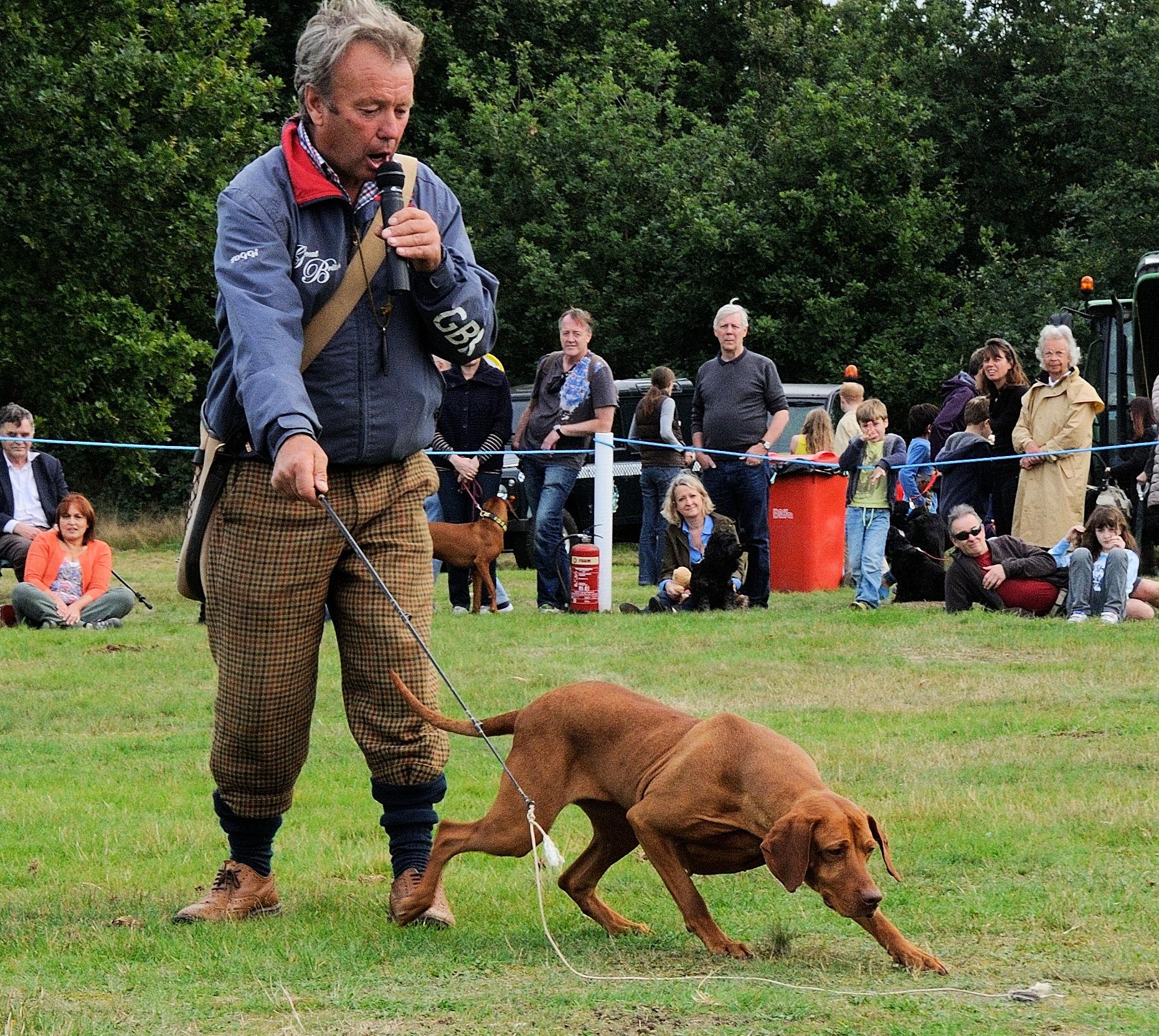 Dog Walking Volunteering Surrey